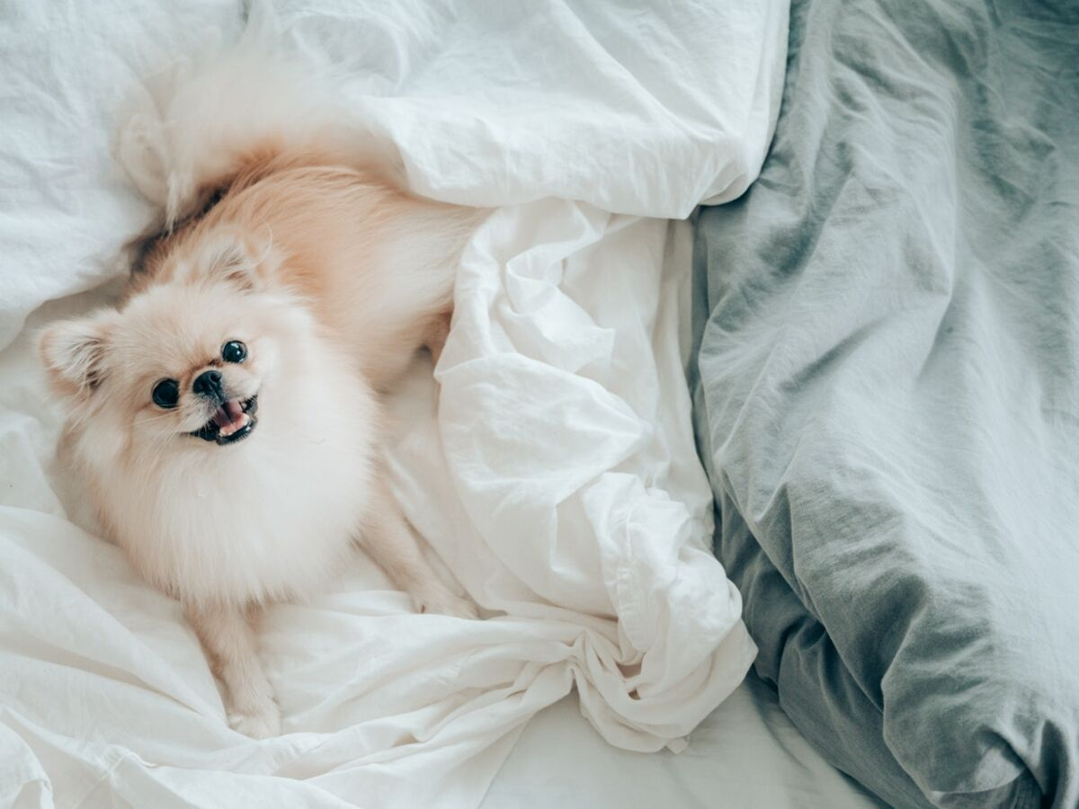 Hund frau intim
