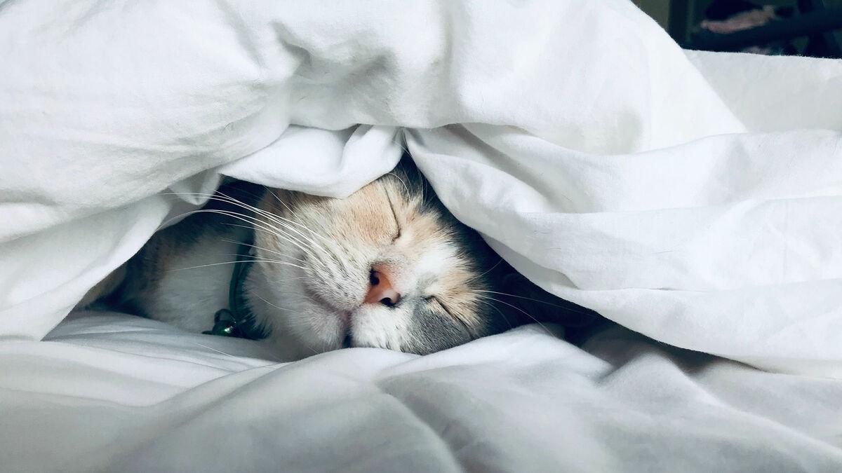 Warum schlafen Katzen so gerne bei uns im Bett?