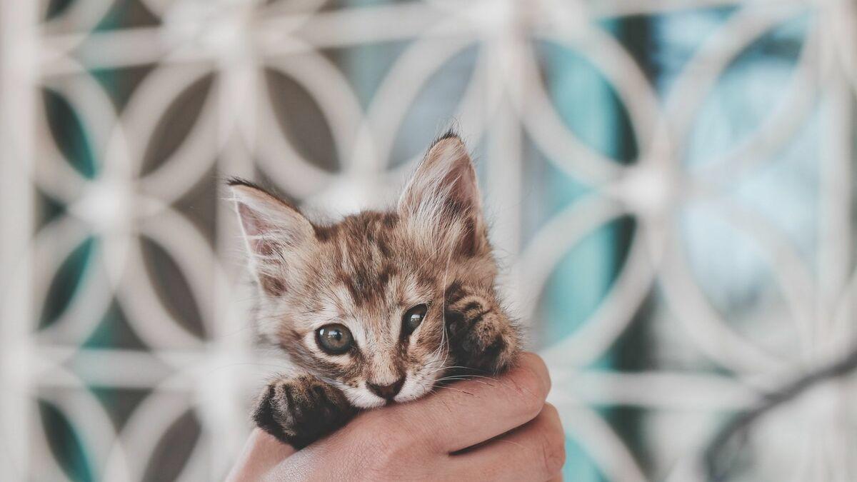 Katze Schwanger Dauer
