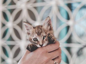 Schwanger Katze Im Bett
